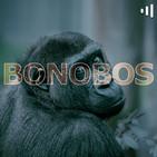 Bonobos: Celebrando a Robert Plant