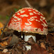 La Luciérnaga 25-10-18. Setas y hongos