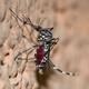 BioBalears 126 - ¡Peligro! Especies invasoras