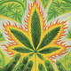 Marihuana Televisión NEWS ESPECIAL ROTOTOM 2012