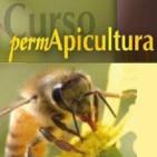 Como era la apicultura antes de que apareciera la Permapicultura