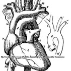 El corazón y Ciencia en el Parlamento (103)