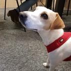 Pipper on Tour, el primer perro donostiarra viajero y youtuber