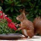 Gardening - Learn Conversational English
