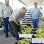 'La Mañosa', nueva marca de la cooperativa de aceites y frutas de Cebolla