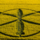 "10-05-2018 Introducción y decodificación de ""crop circles"". Círculo del 8 Mayo. Willoughby Hedge"