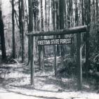 217 - El bosque maldito de Massachusetts