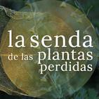 De diosas y hadas que cazan en verde: Artemisia spp. {La Senda de las Plantas Perdidas}