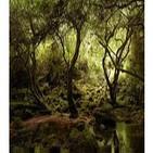 Elficología: seres mágicos del bosque