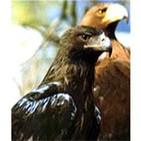Aprender de las águilas