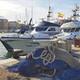 Concentració de bancs d'aladroc en el litoral de Vinaròs
