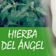 Nutribella - HIERBA DEL ÁNGEL