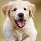 Intoxicaciones en perros