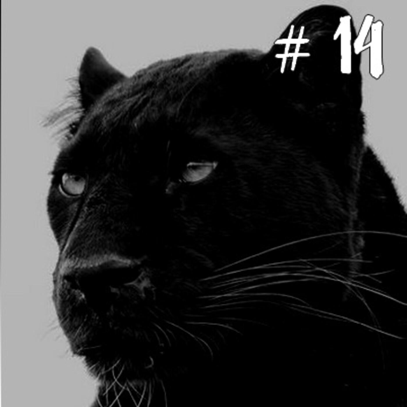 14- Avistamento de Big Cat em Oban, Reino Unido