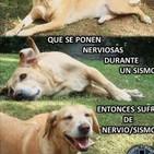 Qué hacer ante el envenenamiento de tu perro