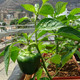 Una historia de vida en la agricultura urbana