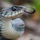 La Luciérnaga 23-05-19. El mito de las serpientes