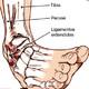 Fisioterapia y Esguince de tobillo