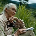 Carta Jane Goodall