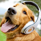 Música pra cachorro