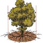 Una guia assessorarà els propietaris per tenir cura dels arbres de la seva propietat per a l'explotació de la fusta