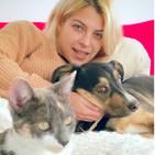 Museo del prado 200 aÑos// thais blume// sanar nuestro gato con acupuntura y mas...