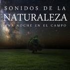 Música relajante para dormir con los sonidos de la naturaleza nocturna (música para dormir profundamente)