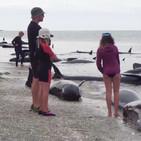 Cuarto milenio (15/03/2020) 15x26: El misterio de las ballenas