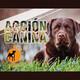 Acción Canina 20