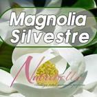 Nutribella- MAGNOLIA SILVESTRE