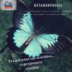 metamorphosis Jimin Hendrix 2 de octubre 2019