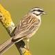 Un 21% menys d'ocells a les nostres zones d'alta muntanya en una dècada