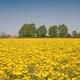 Episodio #012 - La primavera loca