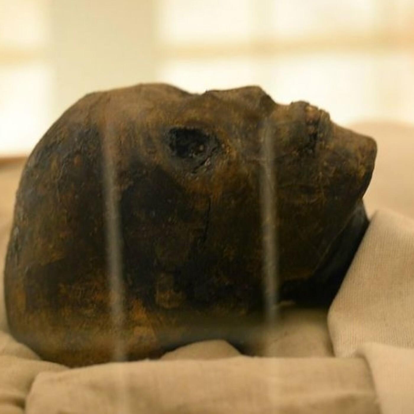 Momias al descubierto: El sabotaje de la momia del rey Tut · Masacre en los pantanos