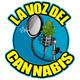 Capítulo 4 - Relatos del Tío: 47 años de Cannabis y otras sustancias