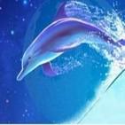 La Ballena y el Delfín
