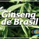 El Ángel de tu Salud - GINSENG DE BRASIL