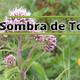 El Ángel de tu Salud -SOMBRA DE TORO