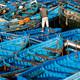 ENTRE LÍNEAS: El acuerdo pesquero entre la UE y Marruecos ensombrece el futuro del Sáhara