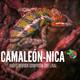 Radiorevista Camaleón-Nica