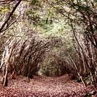 Aokigahara, el bosque de los suicidios.