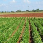 Crece producción en Empresa Agropecuaria de Güines