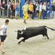 El sector de bous braus de Castelló exigeix diàleg i ajudes a Diputació