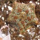 Biodiversidad marina, estrellas de mar y descubrimiento de nuevas especies (106)