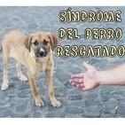 Síndrome del perro rescatado