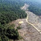 Contacto Tierra 23: Deforestación; Perfil psicológico de los agricultores sostenibles