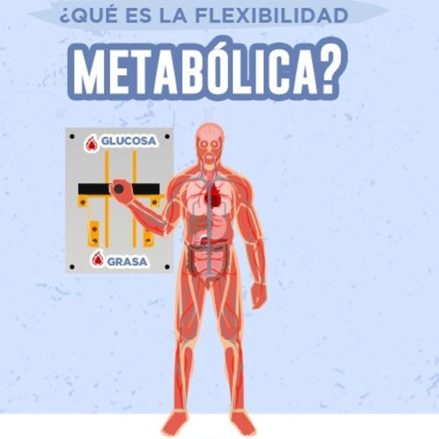 Episodio 68. Cómo ganar flexibilidad metabólica