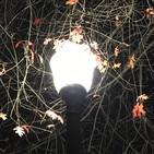 Sabedoria Universal - Aula 6 - Sabedoria das Árvores