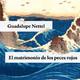 El Matrimonio de los Peces Rojos- Guadalupe Nettel
