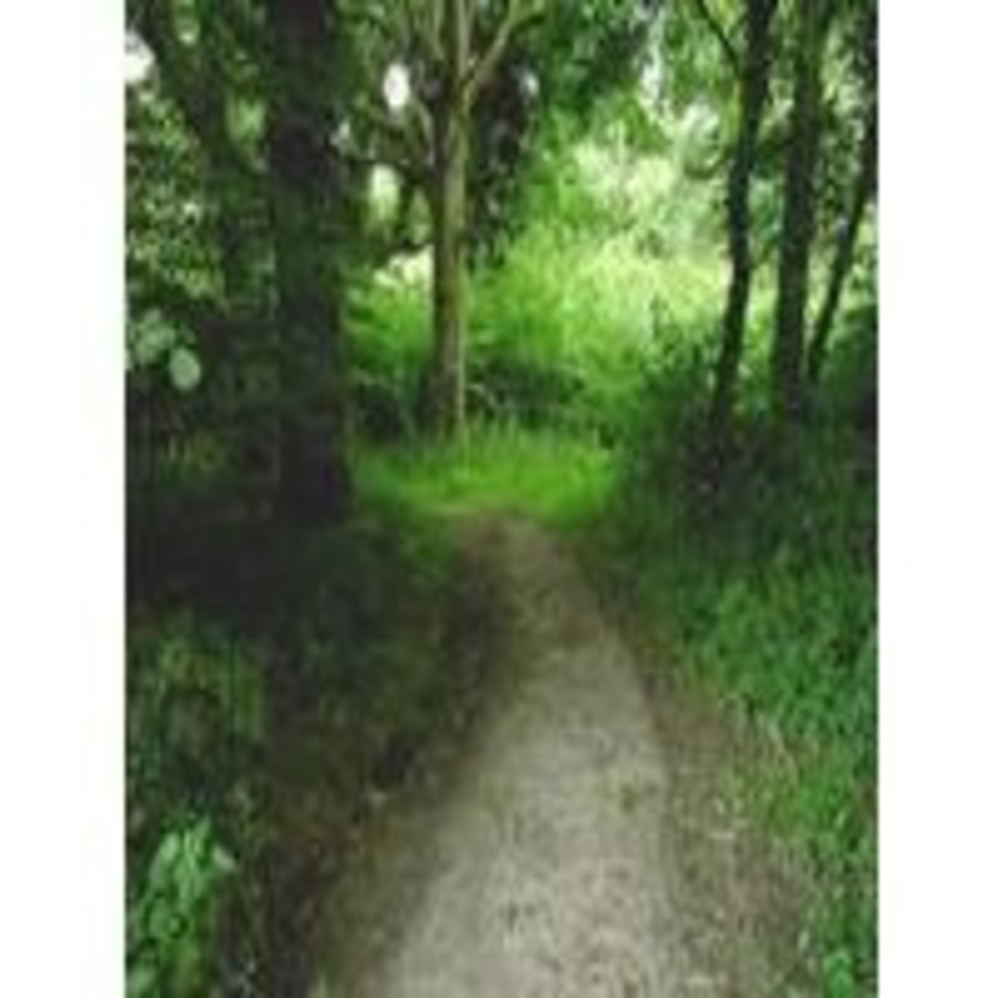 156 - ¿Qué ocurre en el bosque de Clapham? Vol.1